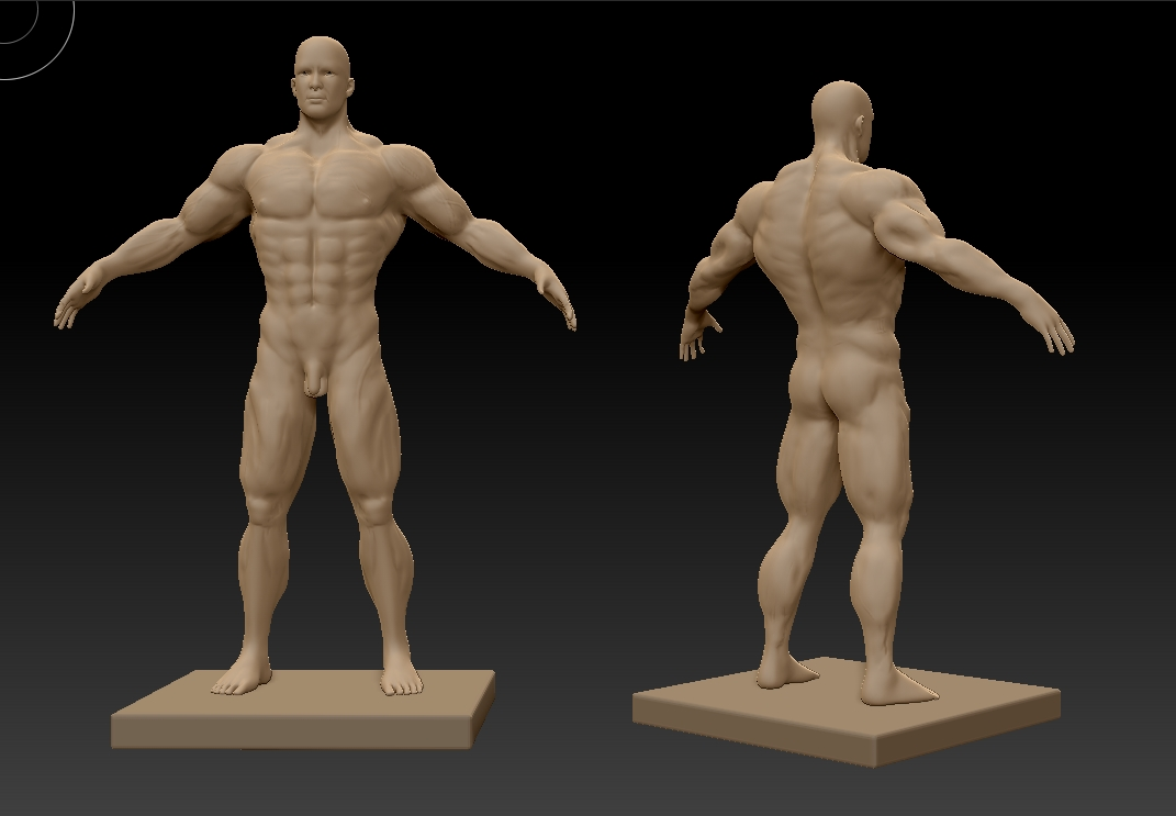 muscles with zbrush | jayanam - 3d games, indiedev, gamedev, Muscles